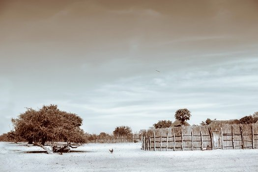 Sepia Photograph of Trees and Hay