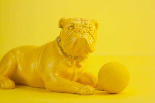 Yellow French bulldog sitting with ball