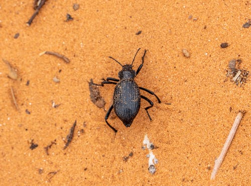 A Close-Up Shot of a Beetle