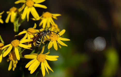 A Bee on a Flower
