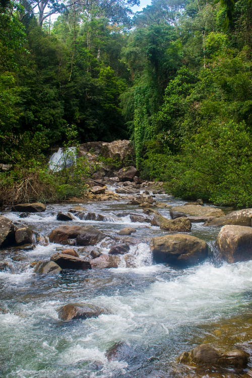 Free stock photo of Sinharaja Rain Forest