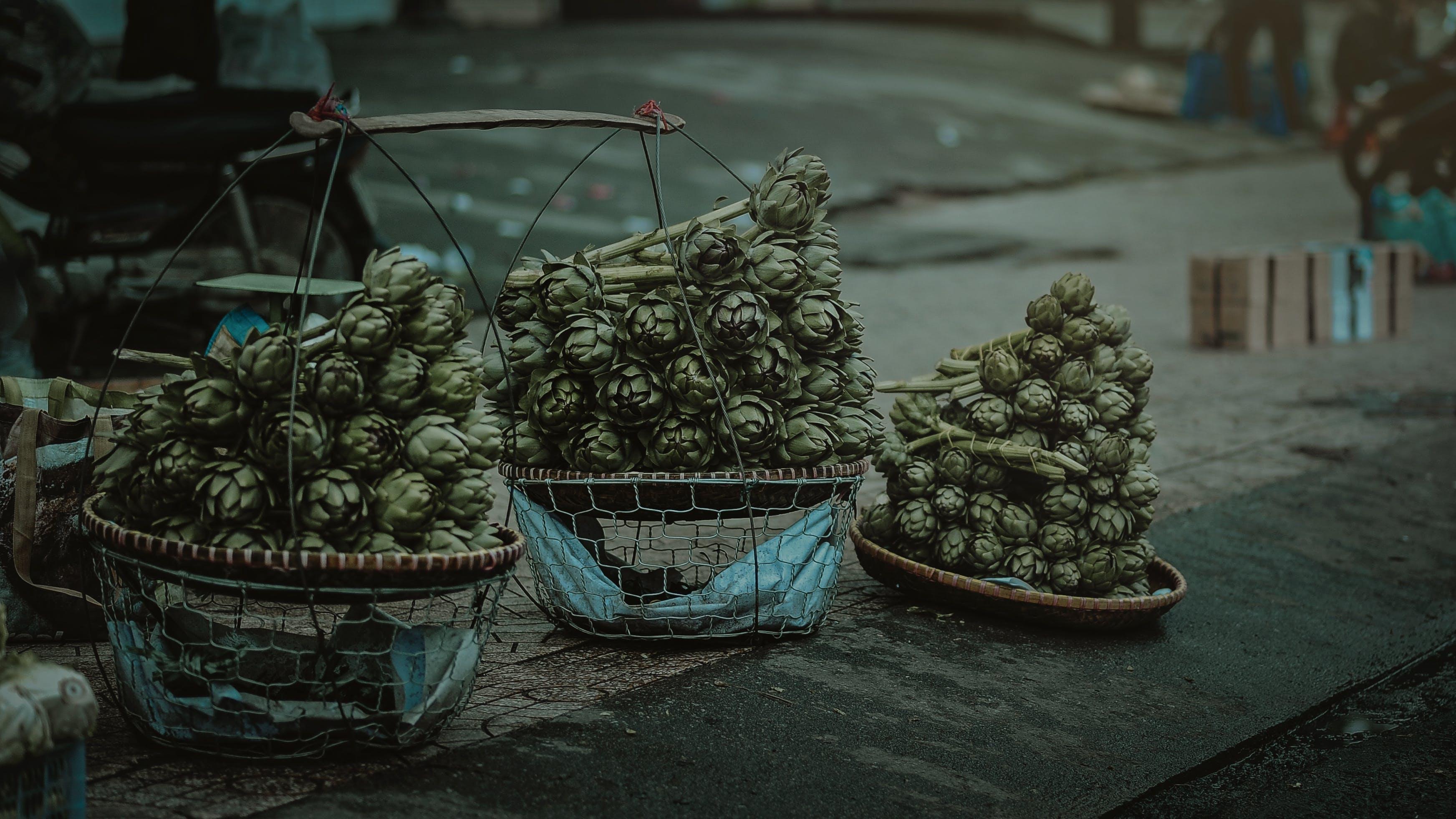 Fotos de stock gratuitas de cactus, canastas, colores, efecto desenfocado