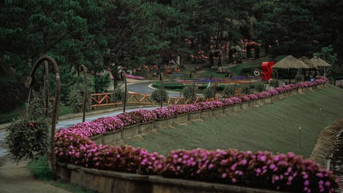 公園, 尼帕小屋, 工厂, 景觀 的 免费素材照片