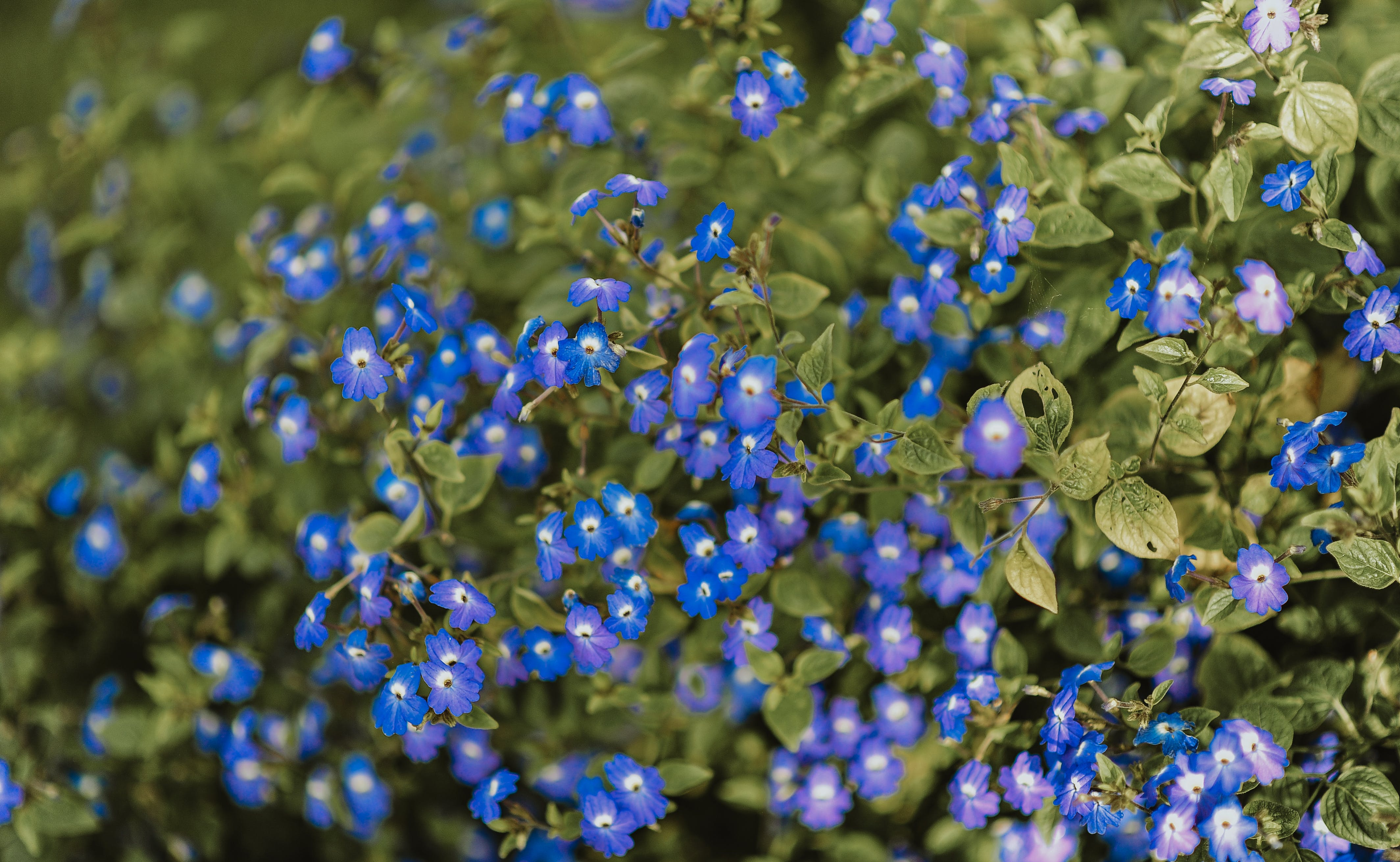 Základová fotografie zdarma na téma barvy, botanický, fialová, flóra