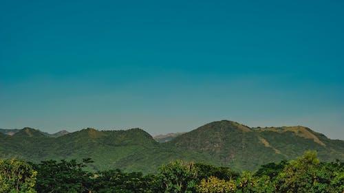 Immagine gratuita di alberi, boschi, cielo, cielo sereno
