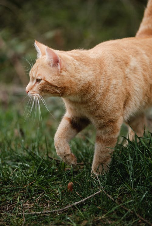 Fotobanka sbezplatnými fotkami na tému cicavec, domáce zviera, ďumbier