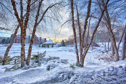 açık hava, ağaçlar, ahşap, beyaz içeren Ücretsiz stok fotoğraf