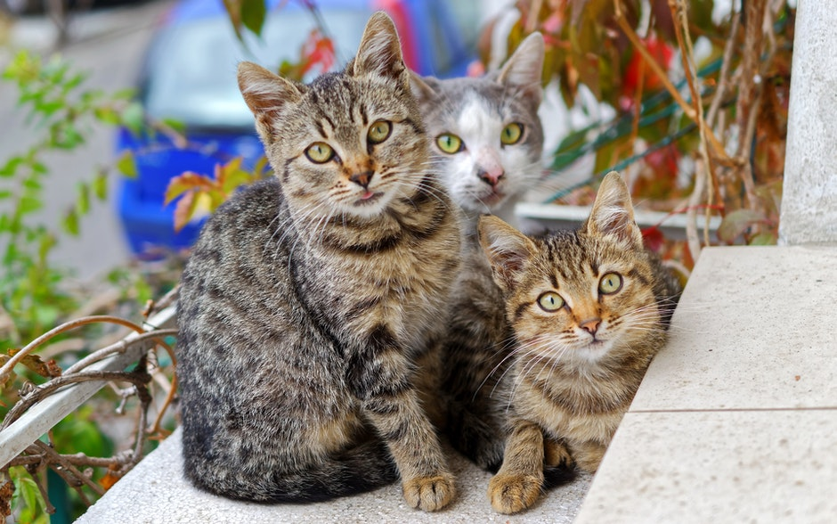 Photo of Three Cats