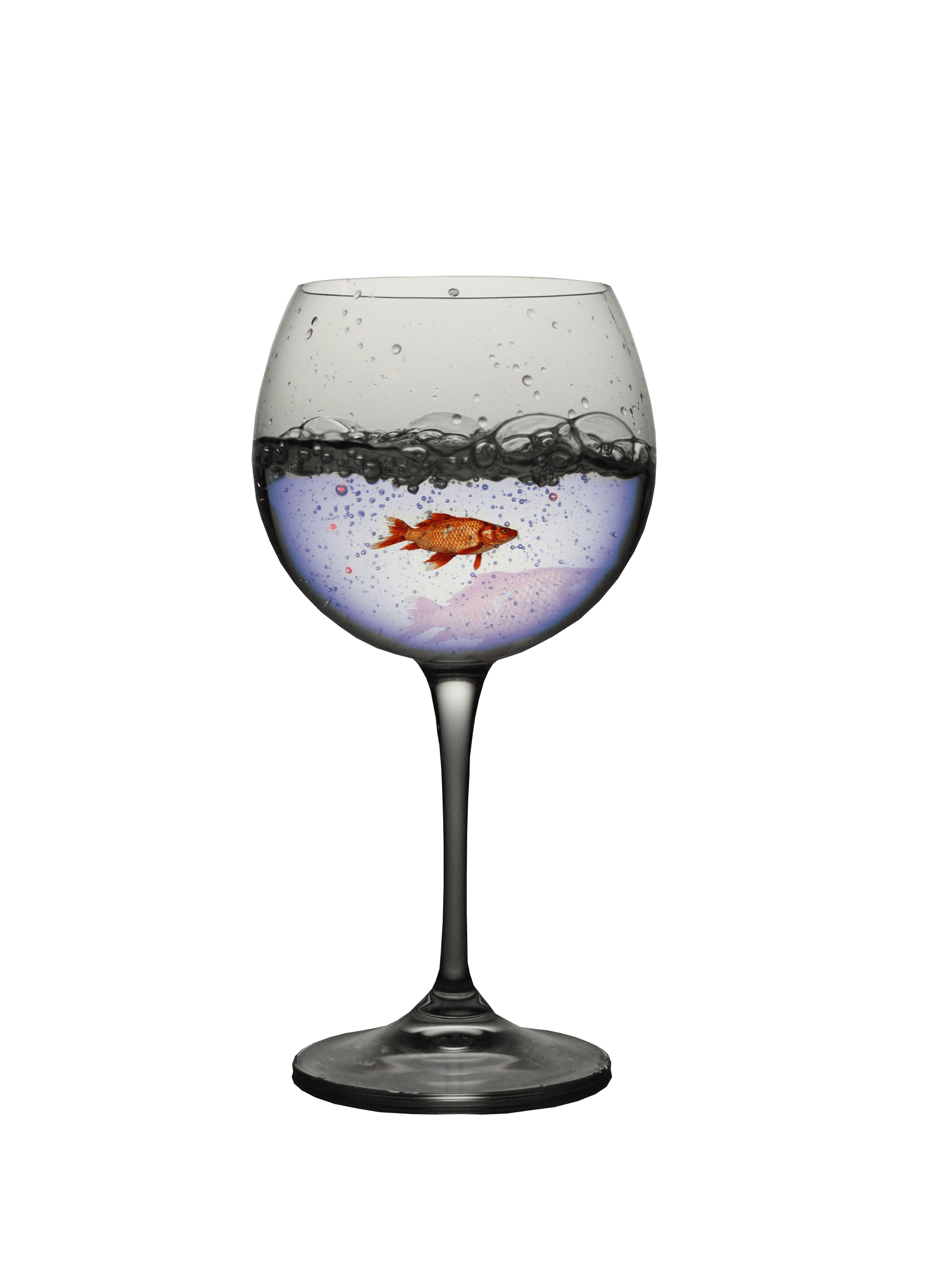 Free stock photo of blue water, cute, fish, fish in glass