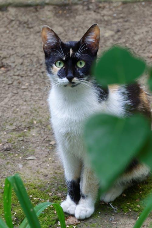 Δωρεάν στοκ φωτογραφιών με Γάτα, χρώμα