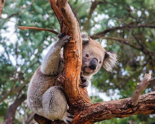 Immagine gratuita di albero, animale, arrampicarsi
