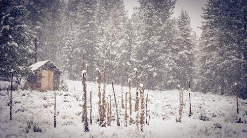 Photos gratuites de arbres, bois, brouillard, brume