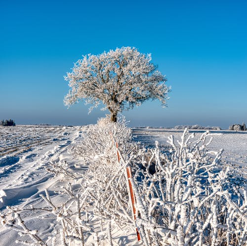White Tree on White Snow Covered Field Under Blue Sky