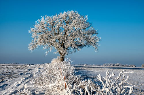 White Tree on Snow Covered Ground