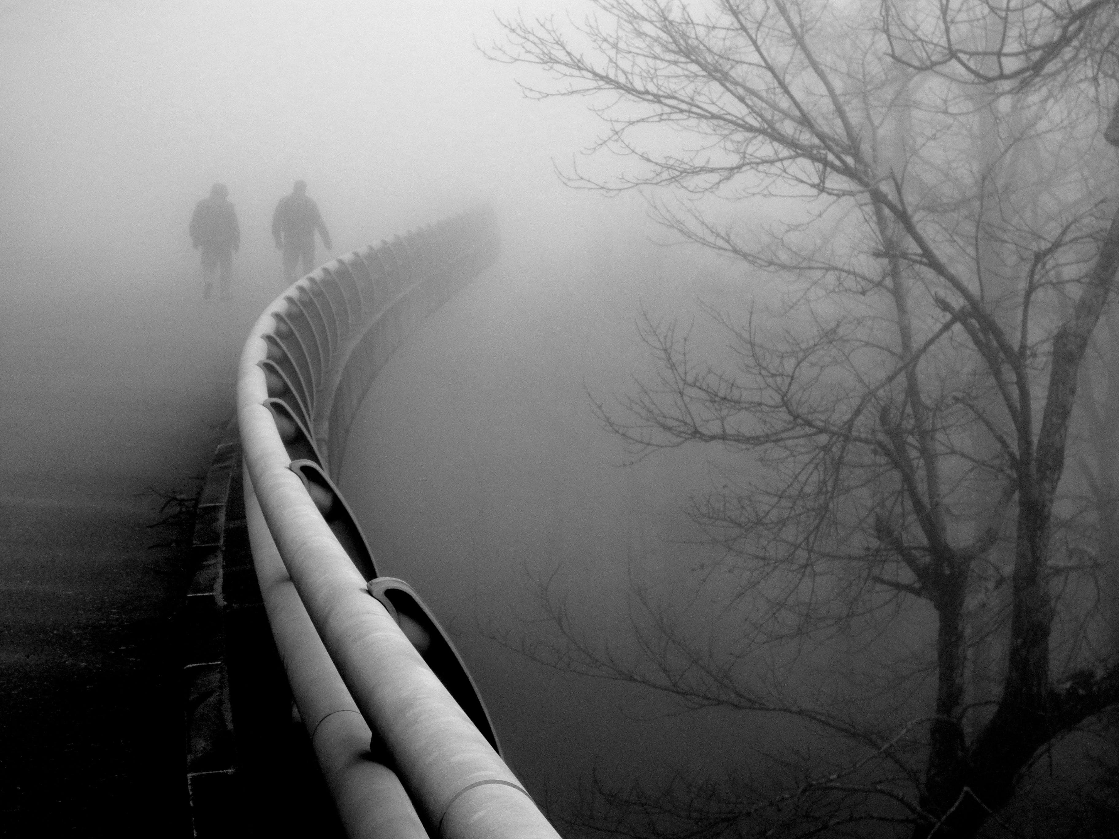 Free stock photo of Linn Cove Viaduct