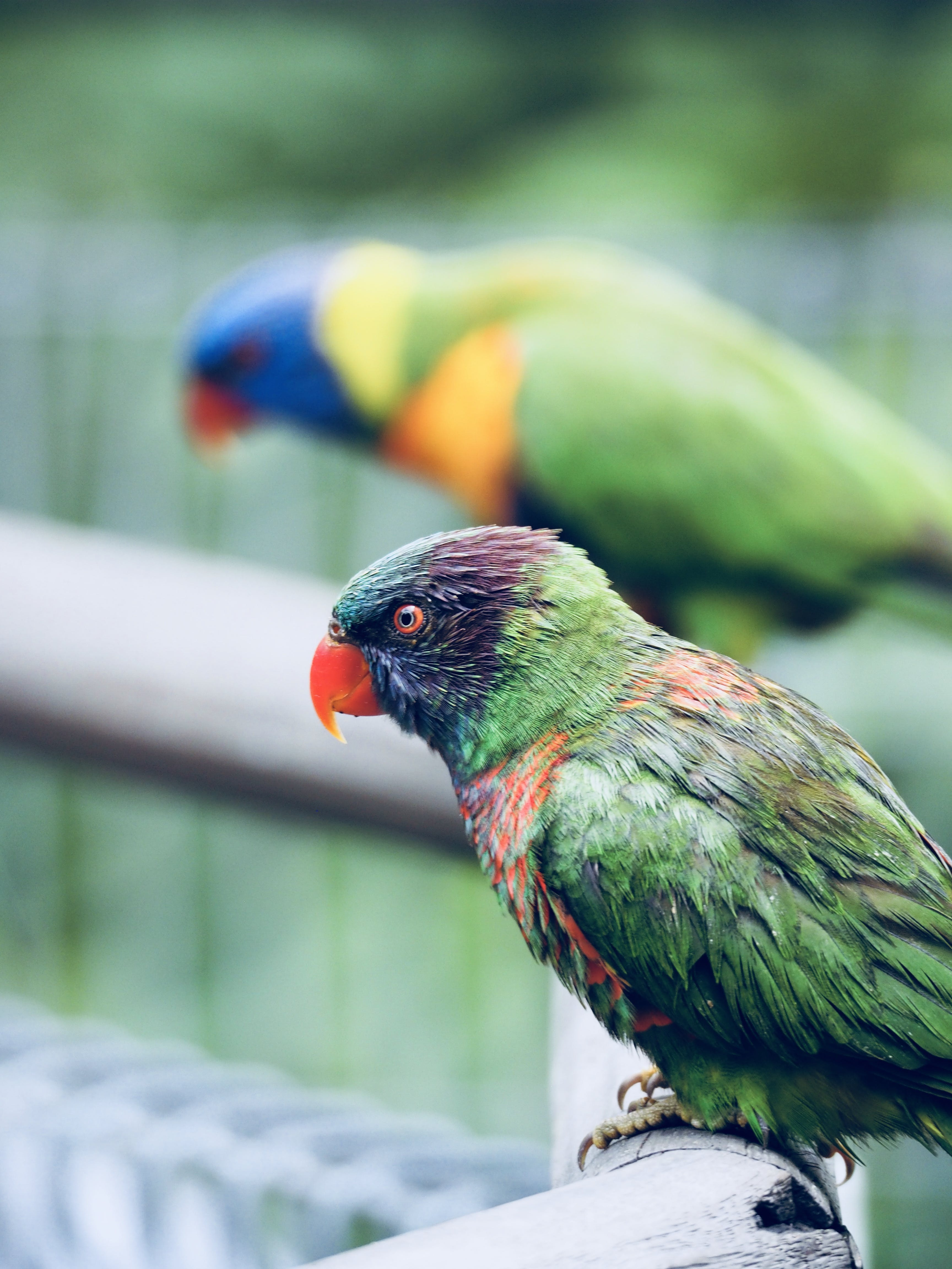 Tilt Shift Lens Photography of Green Short Beak Bird