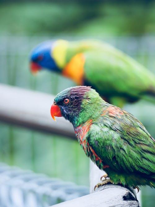 Ilmainen kuvapankkikuva tunnisteilla arapapukaija, eläin, eläintarha, elämä