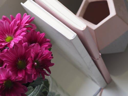 Δωρεάν στοκ φωτογραφιών με ανθίζω, άνθος, βάζο, λουλούδια