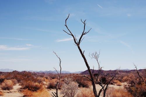 Leafless Tree on Brown Grass Field Under Blue Sky