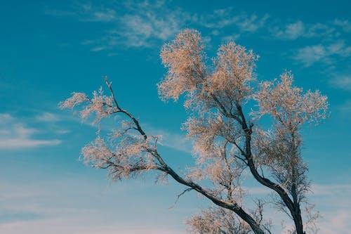 Brown Leaf Tree Under Blue Sky