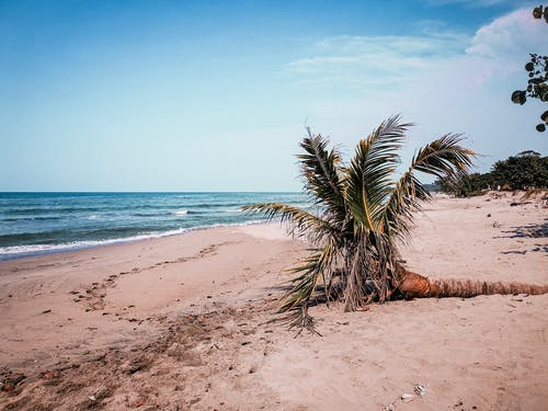 A Palm Tree on the Seashore