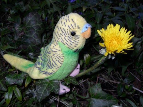 Kostenloses Stock Foto zu gelb, löwenzahn, pusteblume