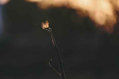 Gratis lagerfoto af gren, guldsmed, insekt