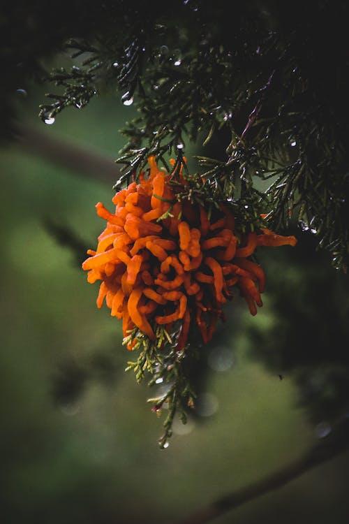Orange Flower on Green Tree