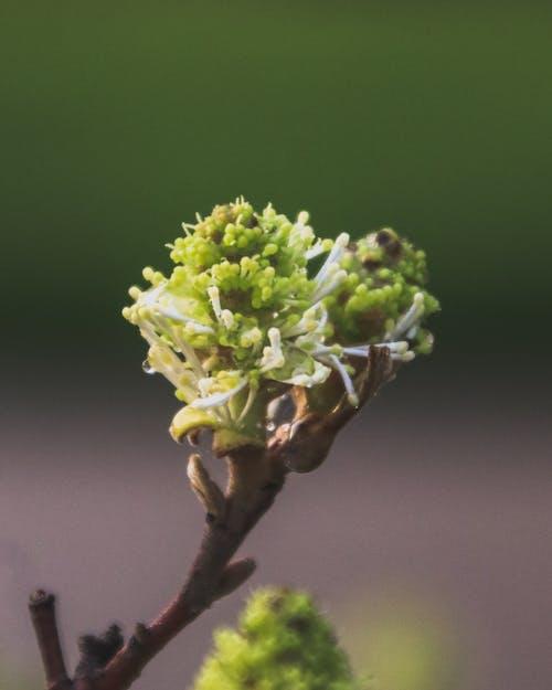 Green Flower in Macro Shot
