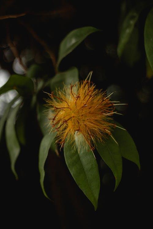 Foto profissional grátis de amarelo, ao ar livre, árvore