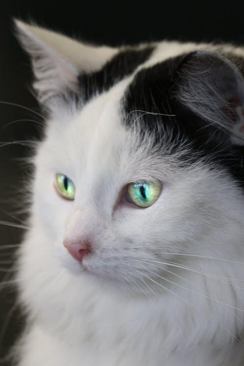 Ingyenes stockfotó állat, aranyos, aranyos háttérkép témában