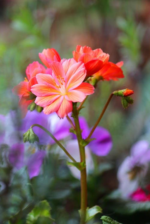 Close Up Shot of Orange Flowers