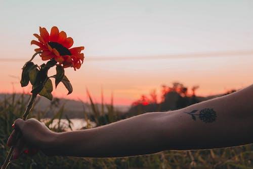 Gratis lagerfoto af arm, gylden time, hånd