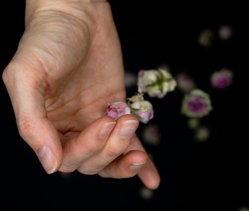Free stock photo of blumen, ernte, hand