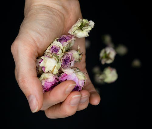 Person Holding White and Purple Flower Bouquet