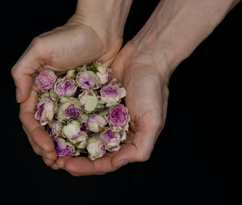 Person Holding White and Purple Flower