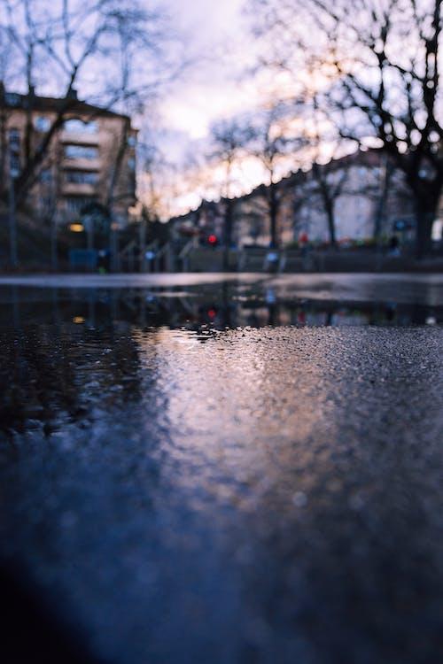 Kostenloses Stock Foto zu low-angle-shot, nach dem regen, nass