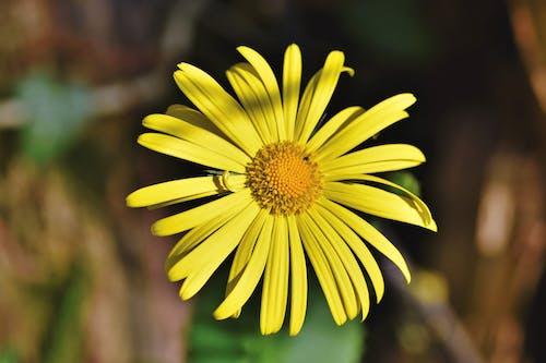 Beautiful Yellow Flower in Bloom