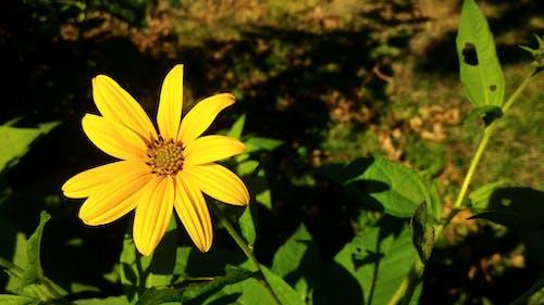 フローラ, ぼやけて背景, 咲くの無料の写真素材