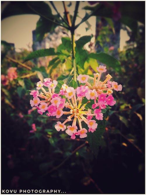 Free stock photo of amazing flowers, beautiful flowers, dark green