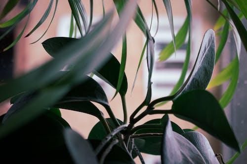Free stock photo of dark green leaves, dark green plants