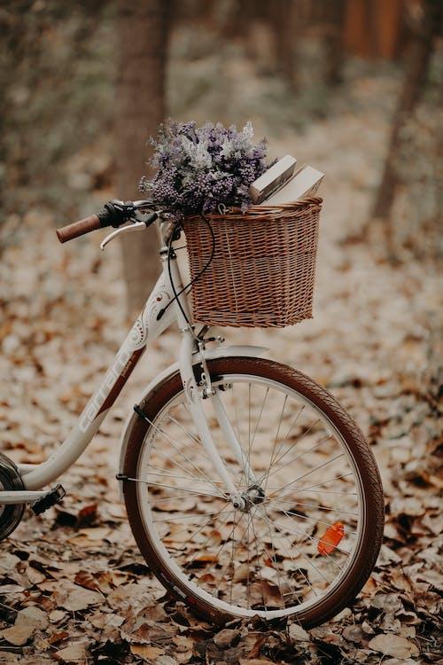 Imagine de stoc gratuită din bicicletă, cădere, codru