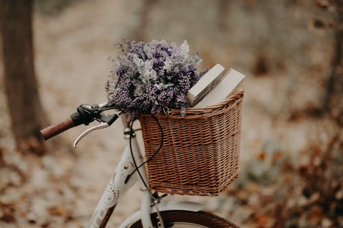 Books and Flowers in the Basket Bike