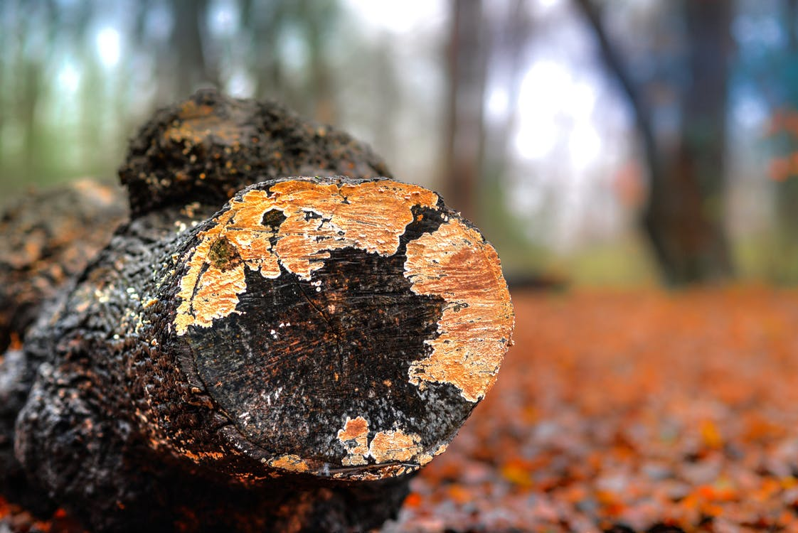 Selective Photography of Wooden Log
