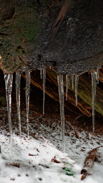 Free stock photo of cold, forest, ice