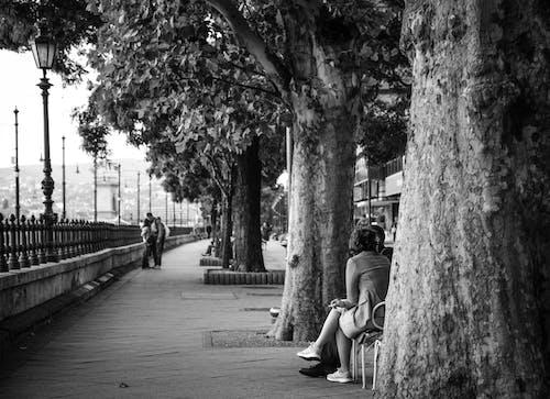 Kostenloses Stock Foto zu bank, bäume, erwachsener, frau