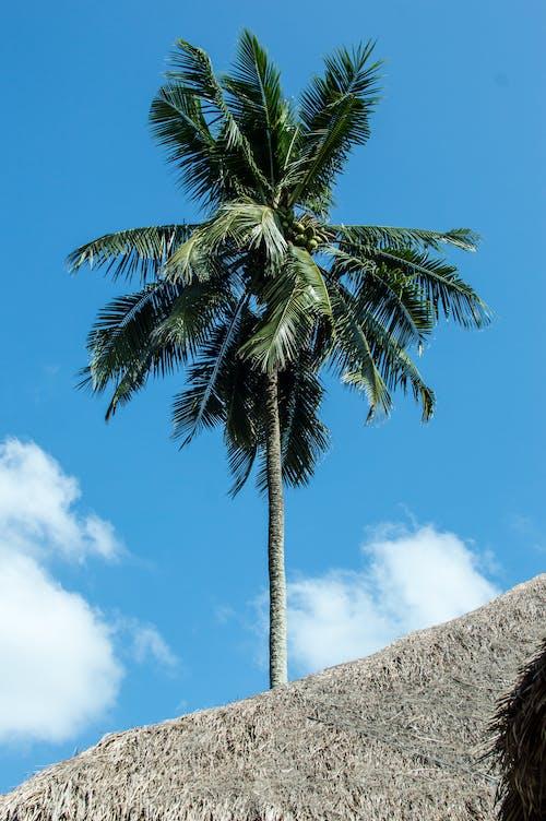 모래, 바다, 요트, 코코넛의 무료 스톡 사진