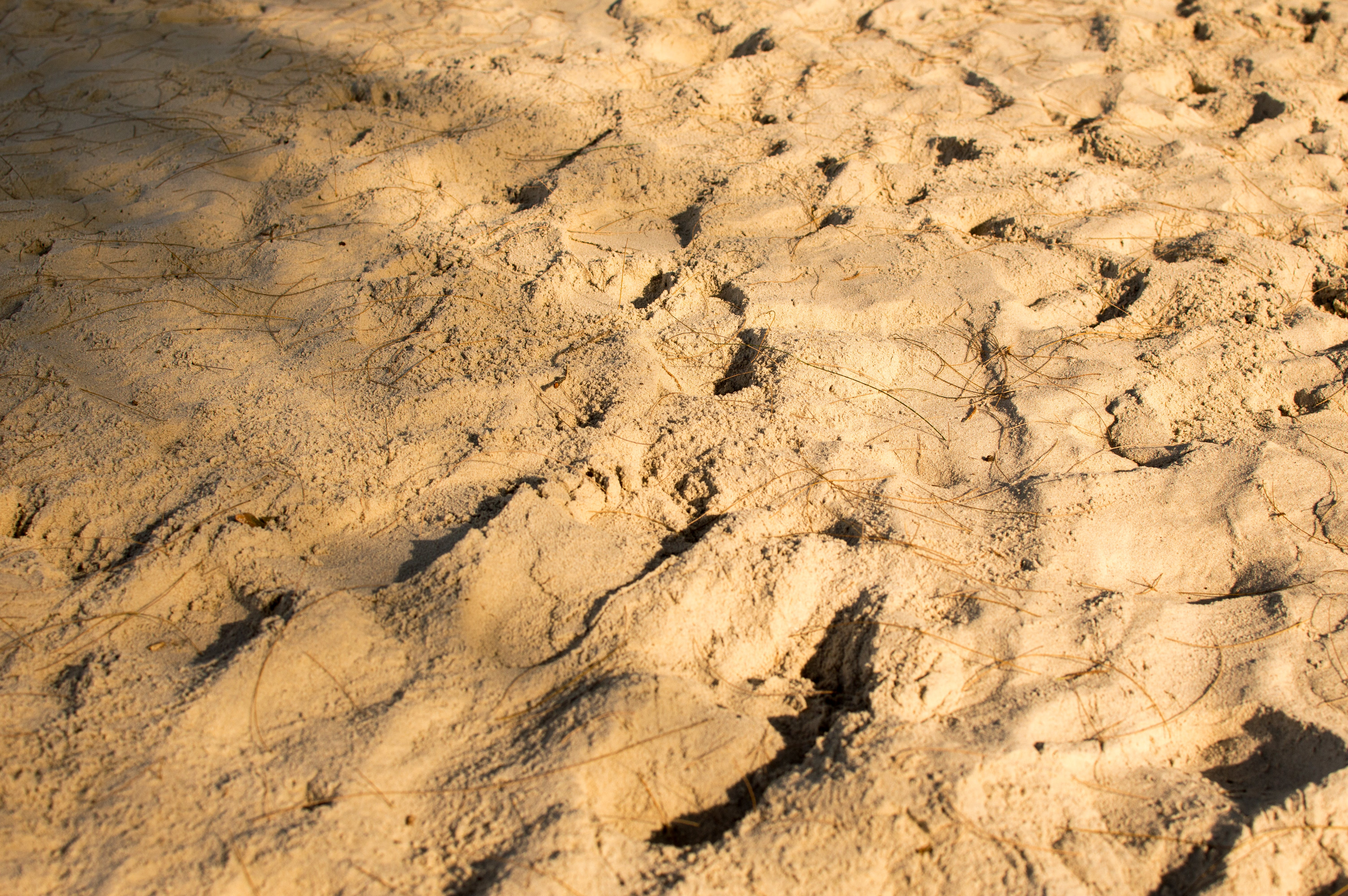 Free stock photo of sea, sky, beach, sand