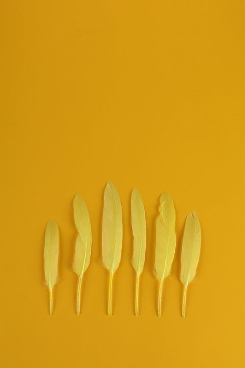 Yellow Plastic Fork Lot on Yellow Surface