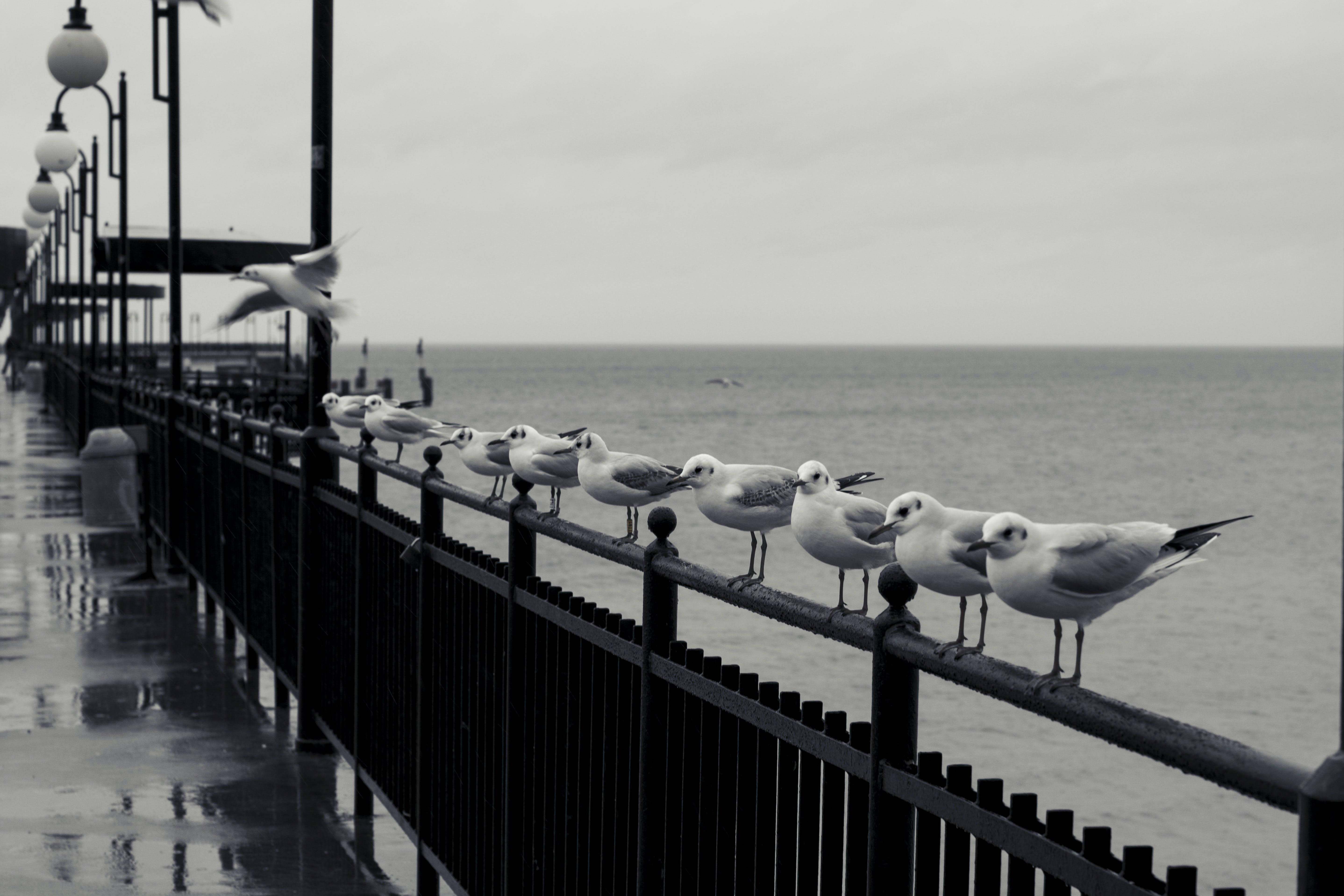 Free stock photo of pier, row, sea, seagulls